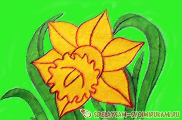 We draw a daffodil