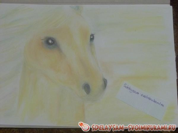 Drawing a portrait of a salt horse