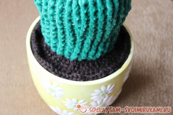 Цветущие кактусы крючком