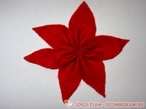 flower poinsettia