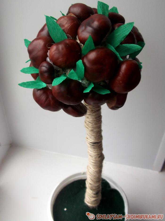 chestnut topiary