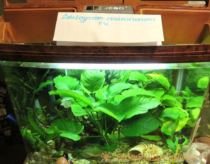 Починка освещения в аквариуме