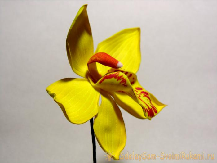 Master class sprigs of orchids