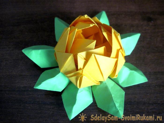 Водное растение кувшинка: описание и фото, разнообразные