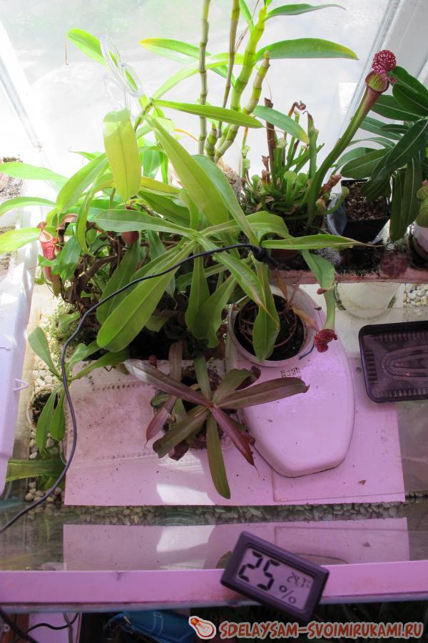 изготовление флорариума
