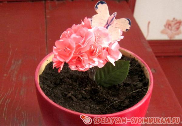 Как вырастить букет цветов  всего за пару часов