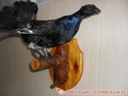 Изготовление чучела птицы