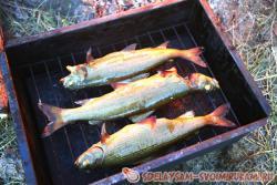 Походные рецепты: рыба горячего копчения