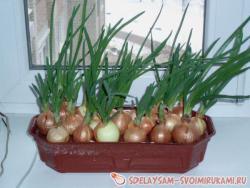 Самодельная установка  для выращивания зеленого лука - пера.
