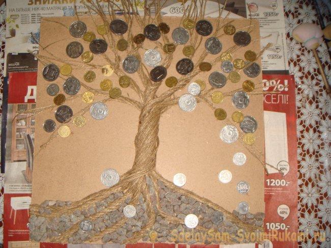 Денежное дерево - как за ним ухаживать в домашних условиях