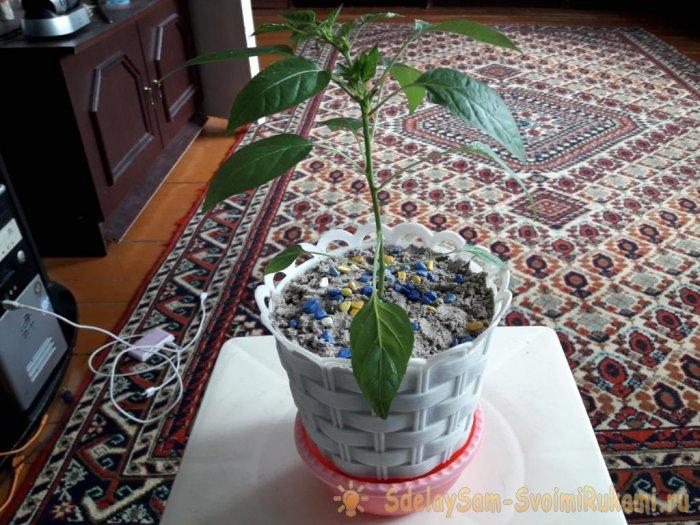 Кашпо с автополивом для комнатных растений. Зачем нужны