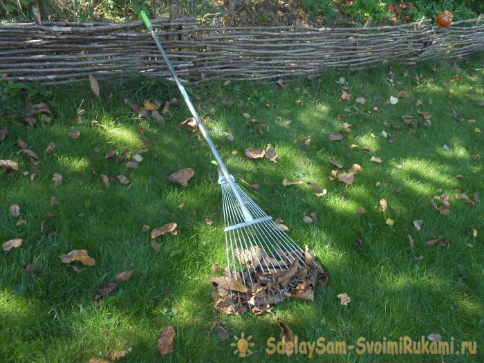Sanitary pruning of trees in the fall