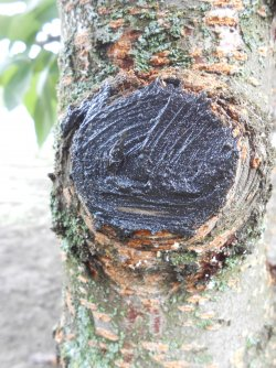 Sanitary pruning of trees in autumn