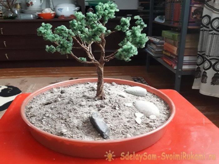 Дерево бонсай своими руками: из сосны, фикуса