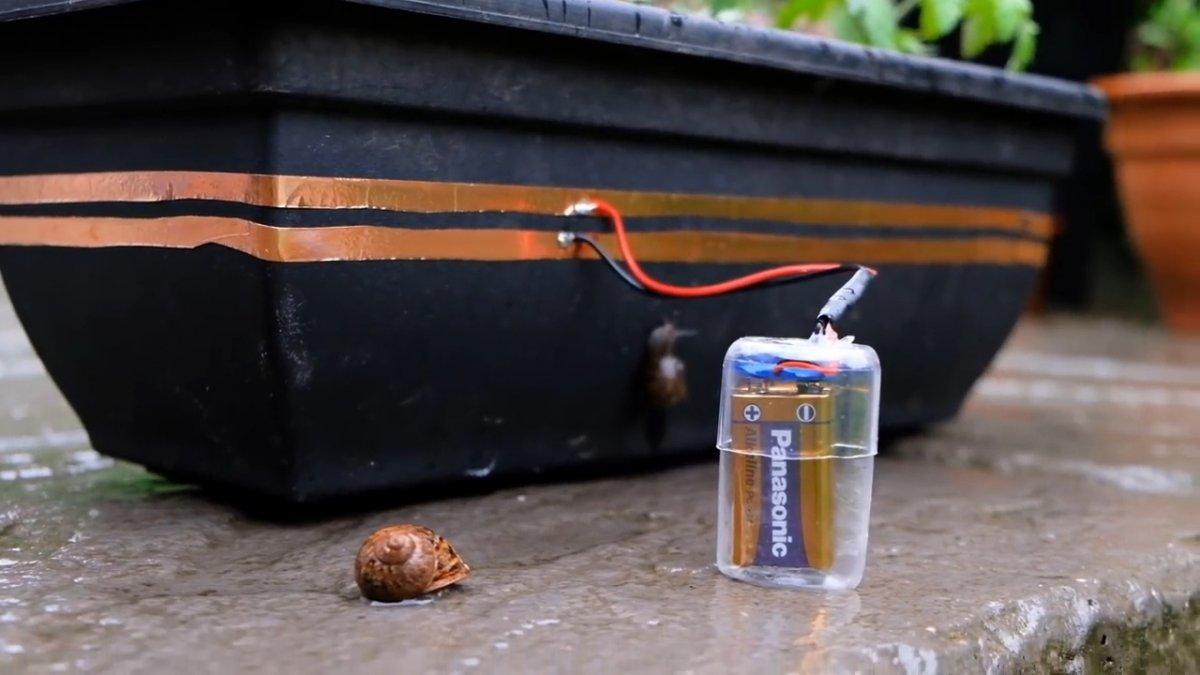 Защищаем рассаду от улиток с помощью электрического тока