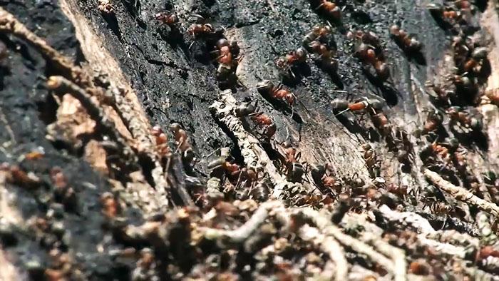 7 эффективных методов борьбы с муравьями