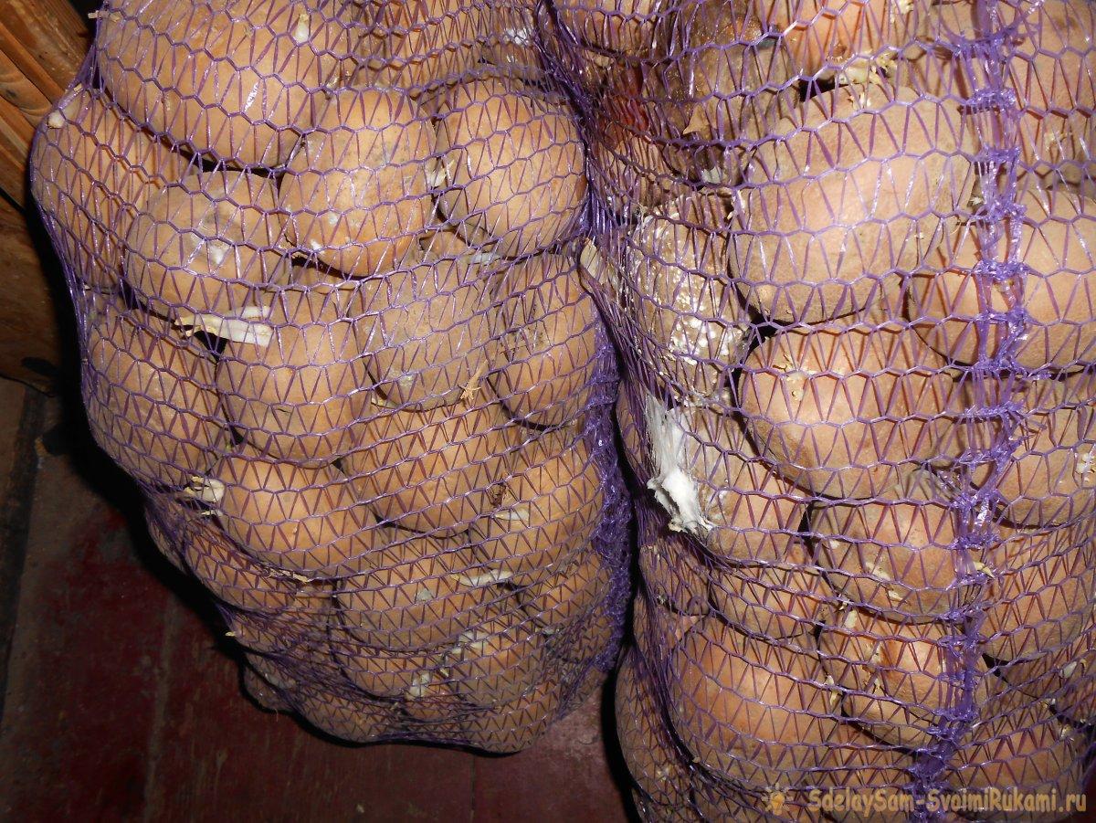 Большой урожай картофеля будет, если правильно подготовить грядки