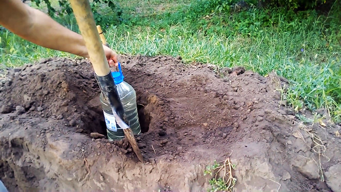 Секрет хорошего урожая: как организовать капельный полив бутылками