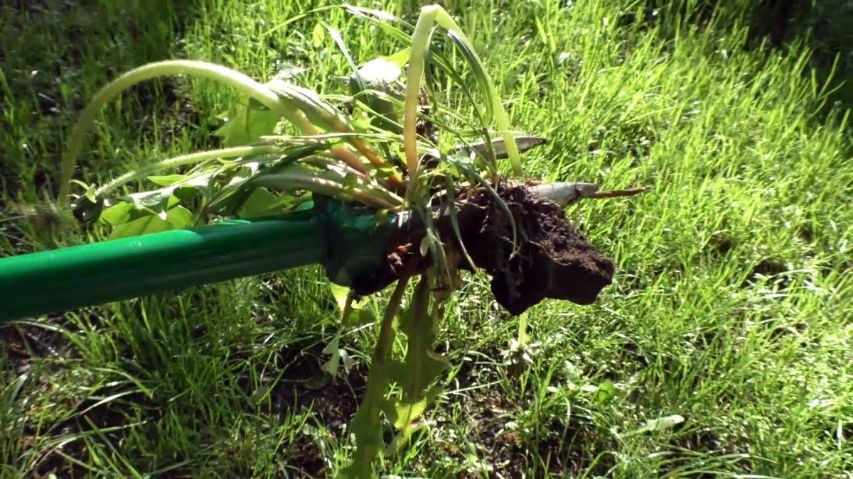 Как сделать приспособление для удаления сорняков с корнем