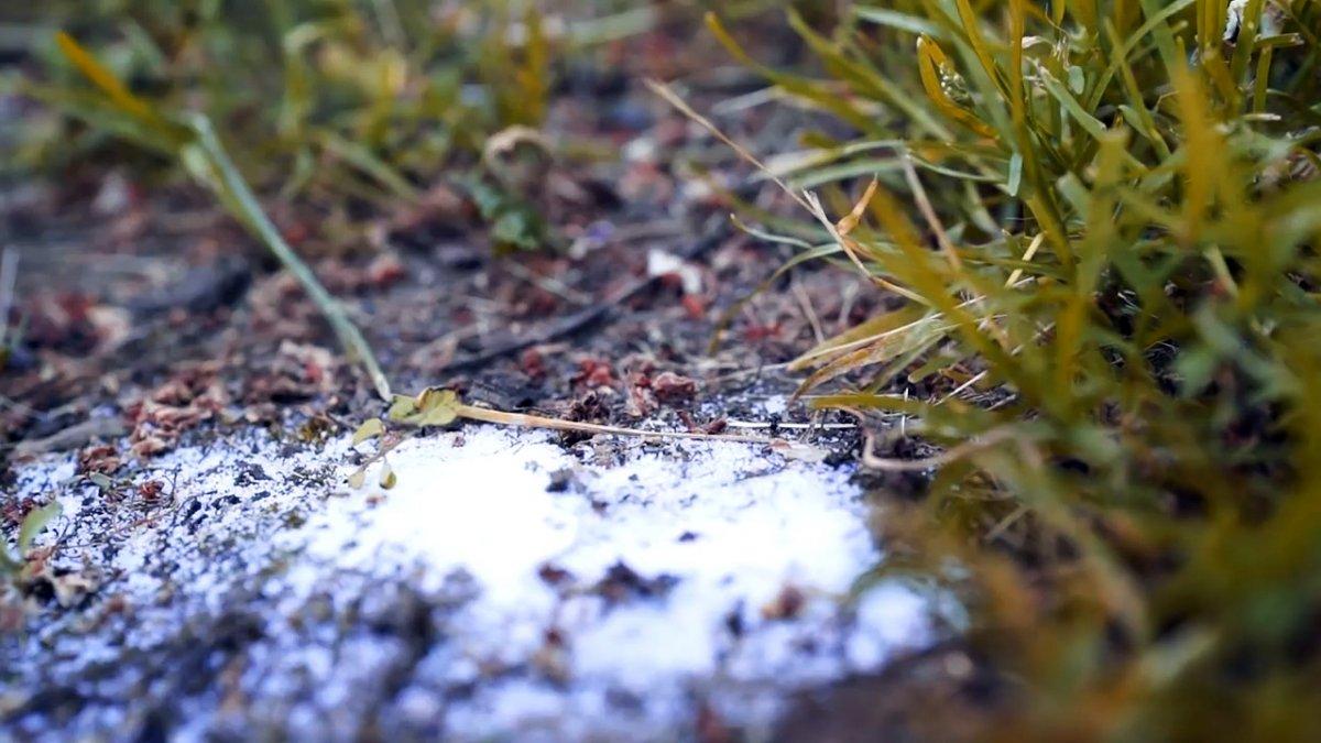 Способ, который избавит огород от муравьев навсегда