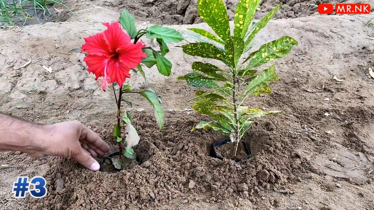 6 полезных приспособлений для вашего сада с АлиЭкспресс