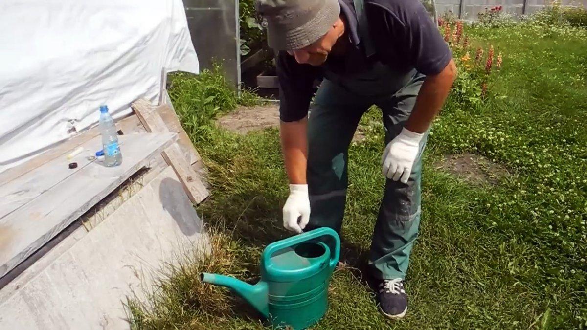 Избавляем участок от всех муравейников всего одной ампулой