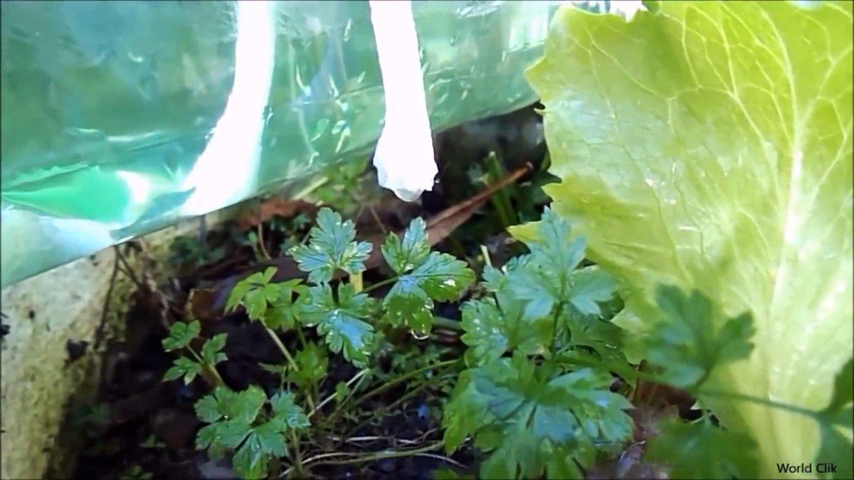 Как из обычной бутылки делать систему автоматического полива
