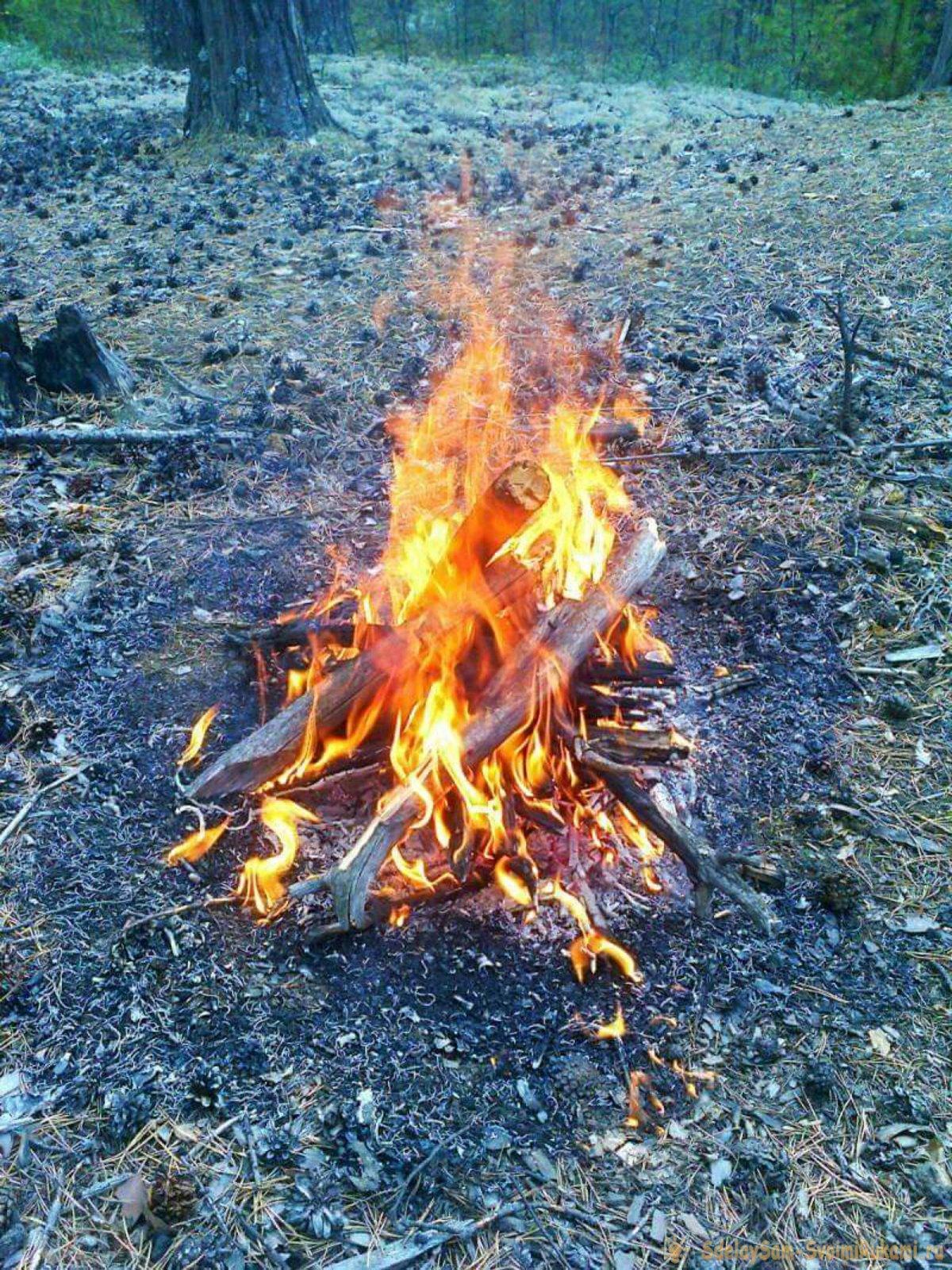 Как добыть огонь в лесу без спичек и зажигалки