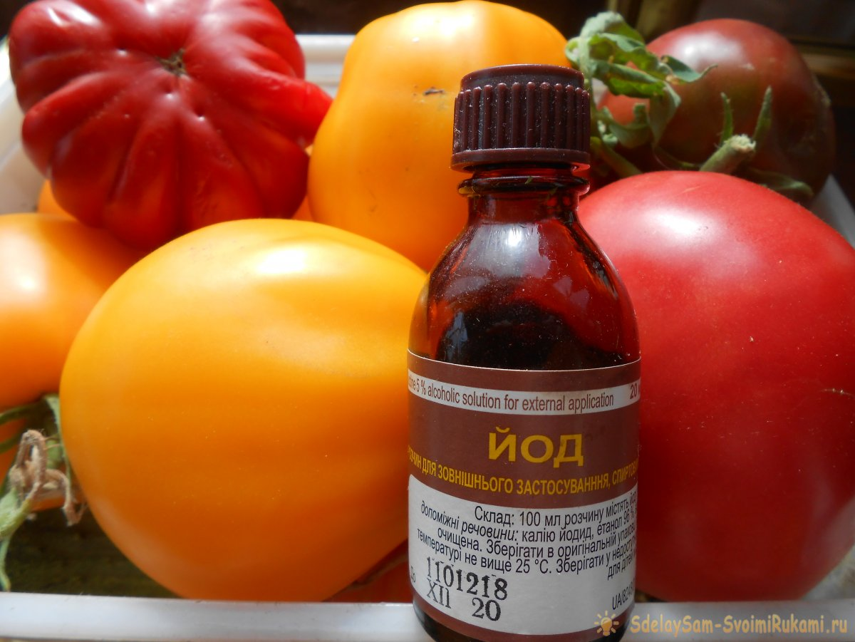 Простая профилактика томатов в середине лета избавит от фитофтороза