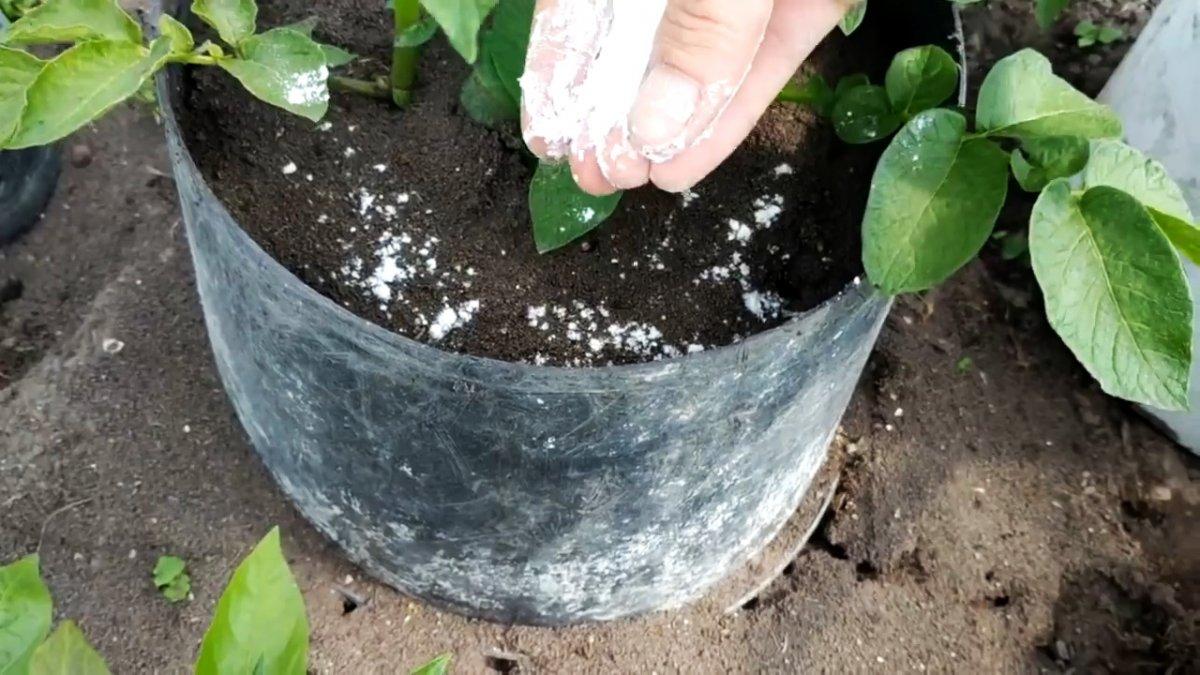 Единоразовая обработка этим способом избавит вас от муравьев навсегда