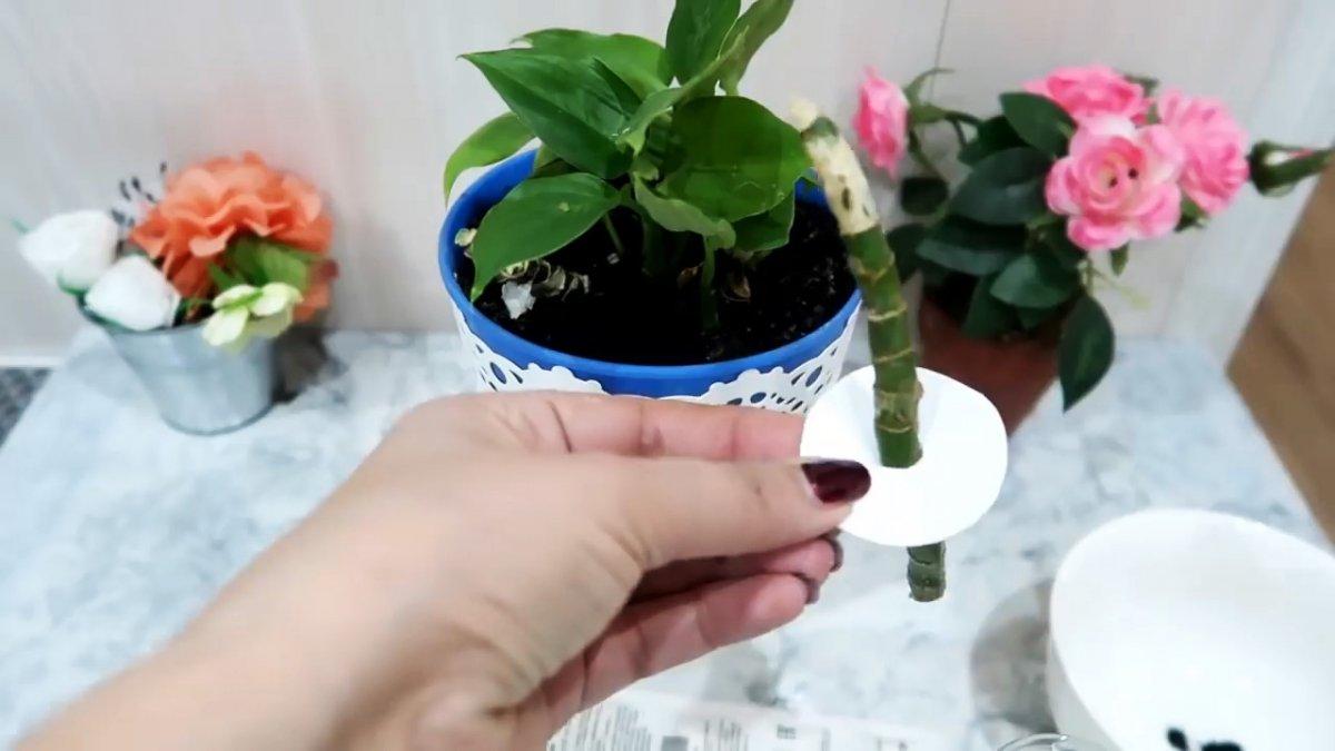 Супер способ для 100 процентного укоренения черенков любых растений