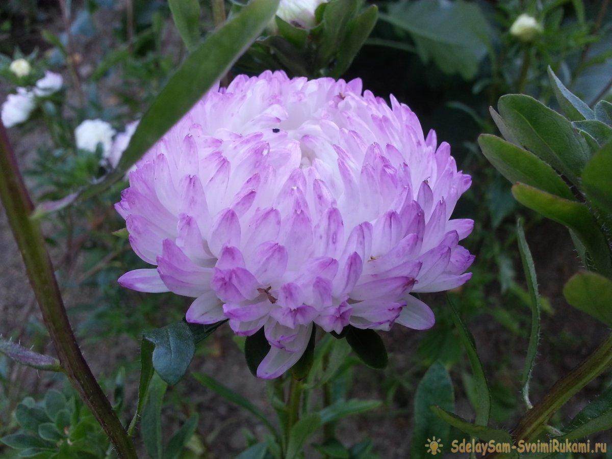 Осенний сад: топ-7 ярких цветов, которые цветут в сентябре