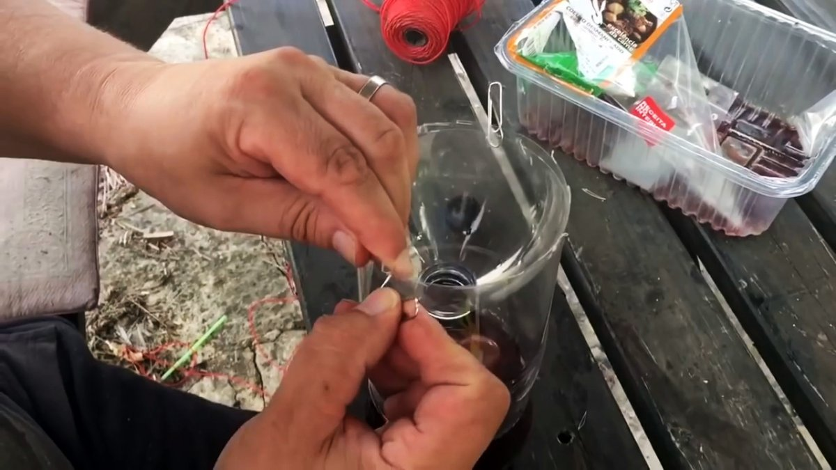 На вашем участке не останется мух, если сделаете эту мухоловку из полторашки