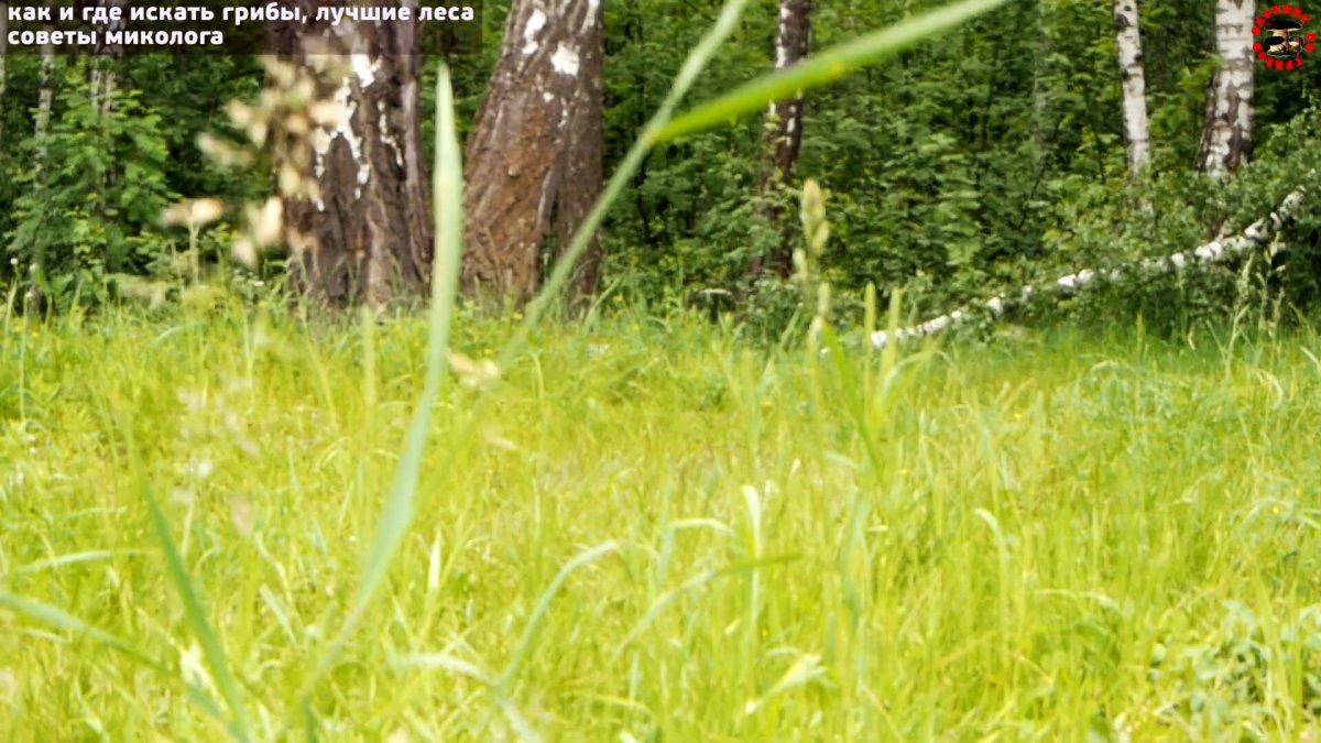 Как не уйти из леса без грибов. Советы профессионального миколога