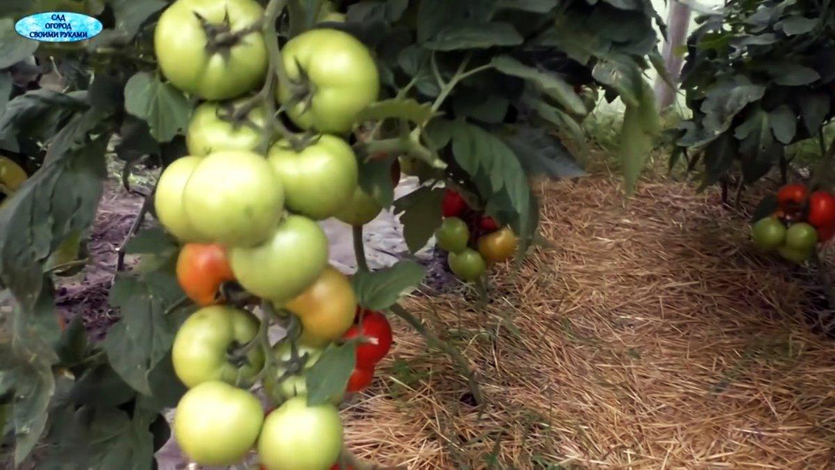 Хотите следующий летом получить небывалый урожай? Тогда сделайте так