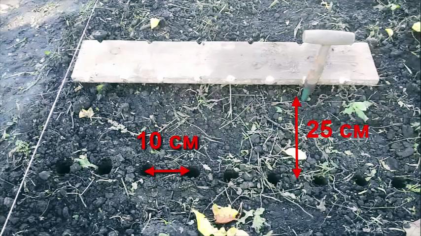 Как сажать лук под зиму, чтобы получить рекордный урожай