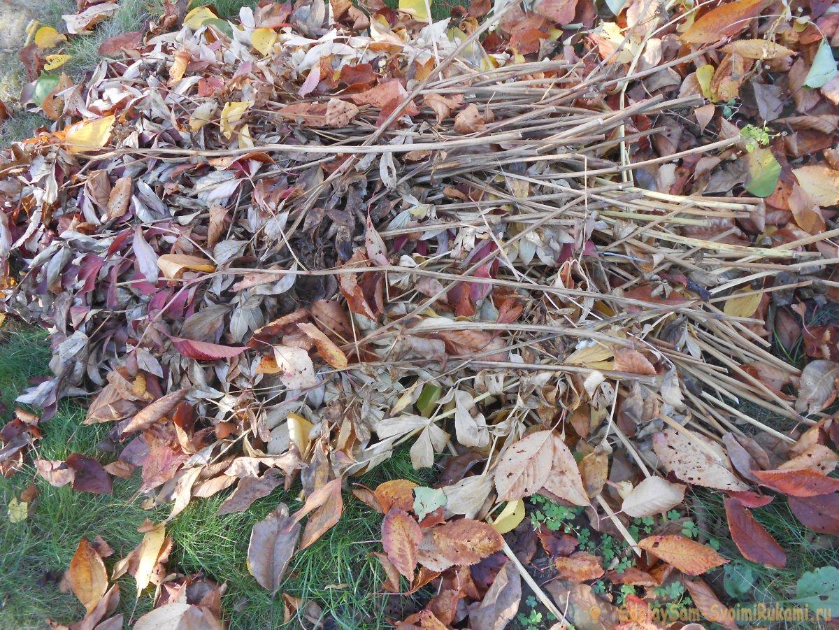 Правильная санитарная обрезка сада и почему это полезно делать осенью