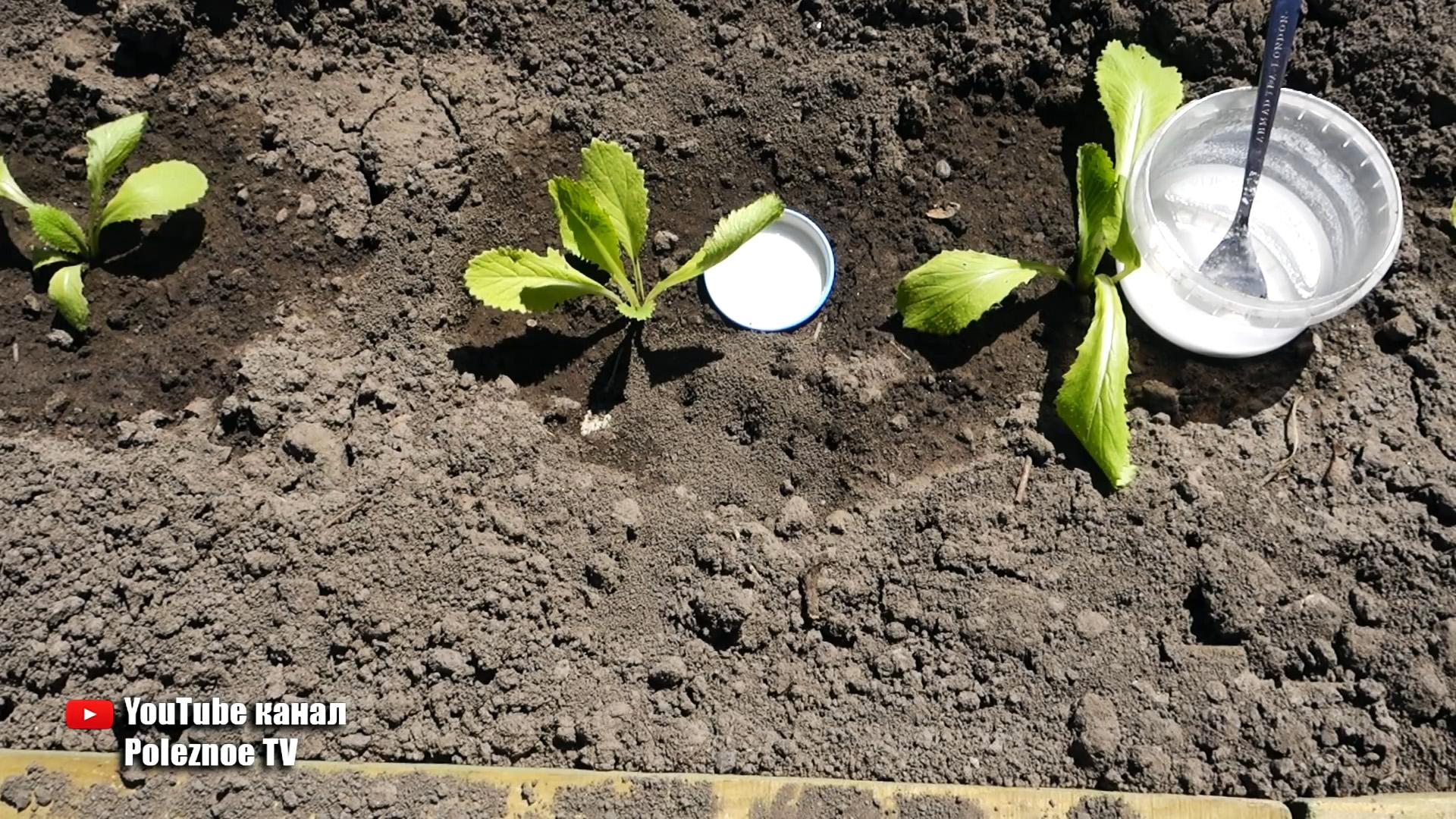 Простое и эффективное средство поможет избавиться от надоедливых муравьев
