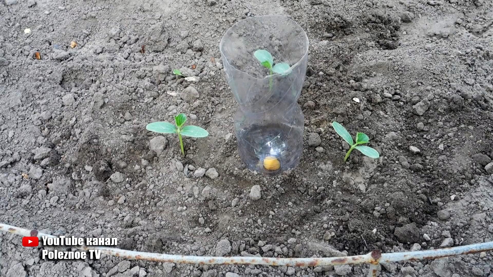 Система корневого полива из ПЭТ бутылки поможет растениям и сэкономит вам воду