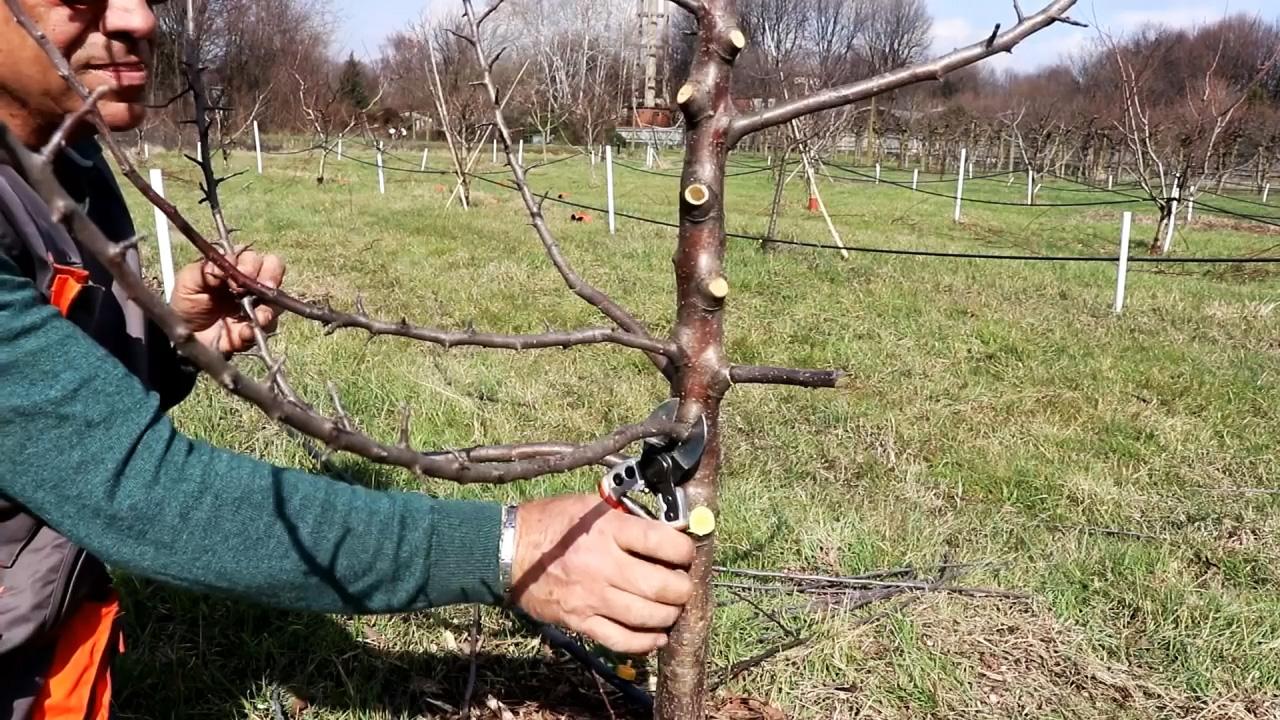 Прививка деревьев шуруповертом