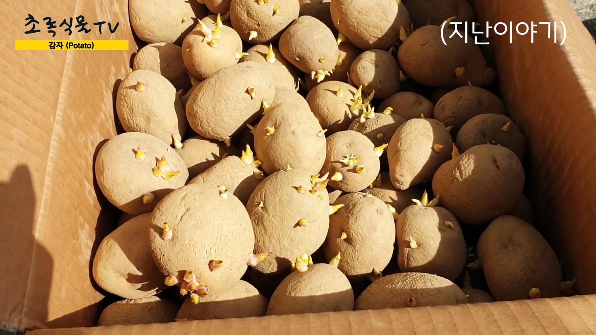 Новый способ выращивания картофеля без прополки и окучивания