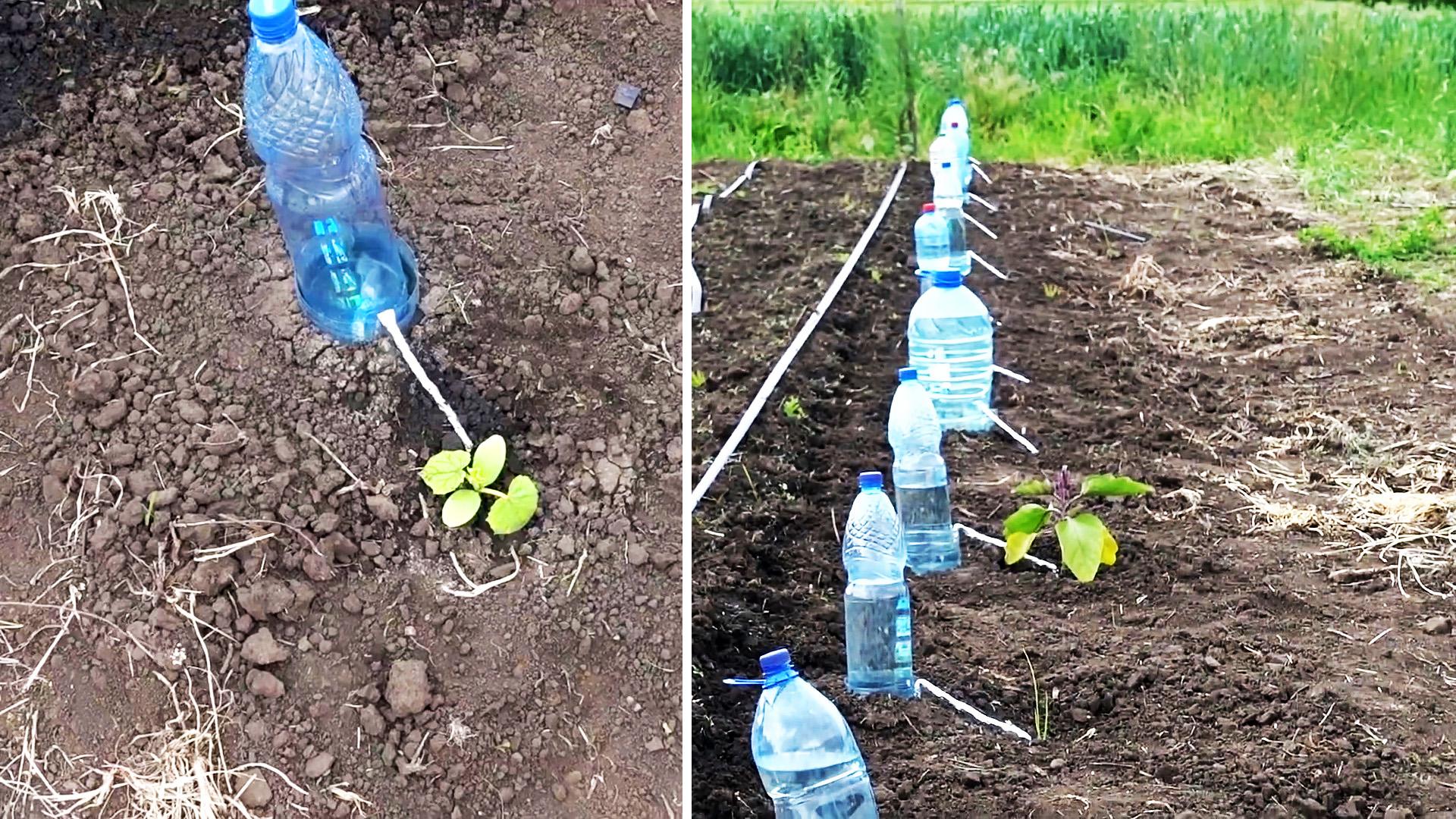 Система капельного полива на 30 дней из пластиковой бутылки