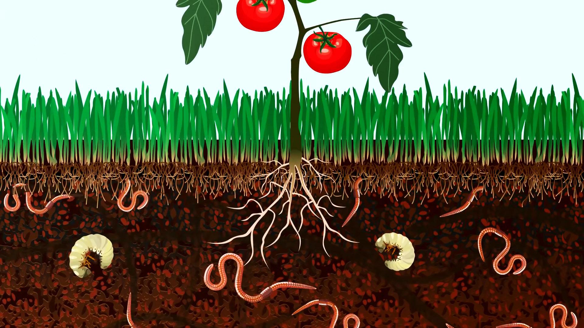 Как превратить пищевые отходы в крайне полезное удобрение