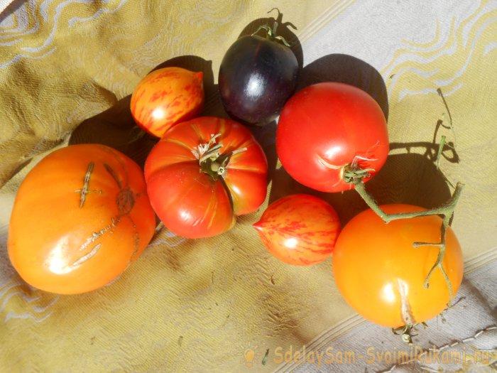 Оптимальная шестидневная схема подкормки томатов в период активного плодоношения