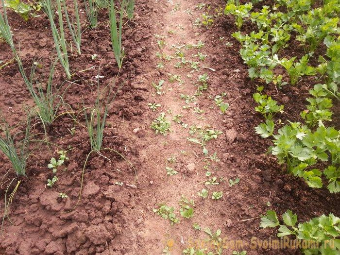 Топ-10 ошибок при выращивании овощей которые могут стоить вам урожая