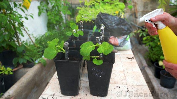 4 способа проращивания черенков Какой лучший