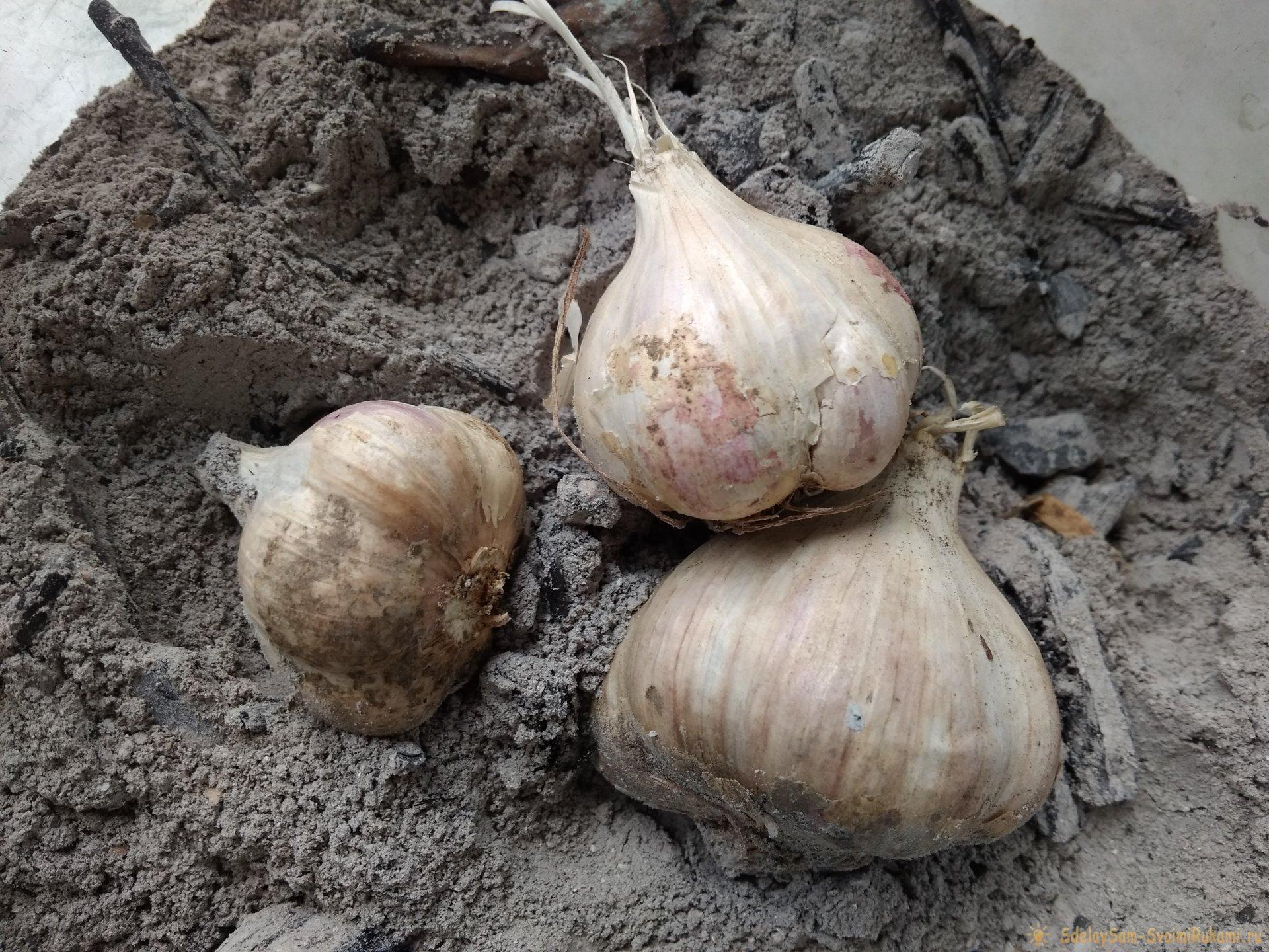Чеснок в золе: проверенный способ сохранения урожая в погребе и на кухне