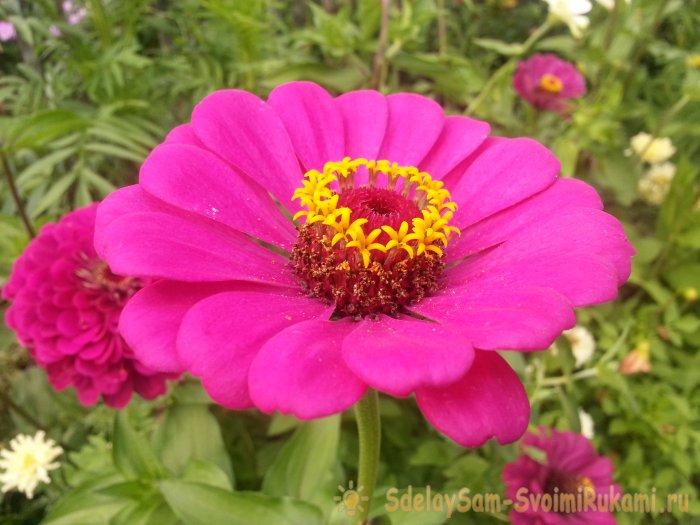 Осенний сад топ-7 ярких цветов которые цветут в сентябре