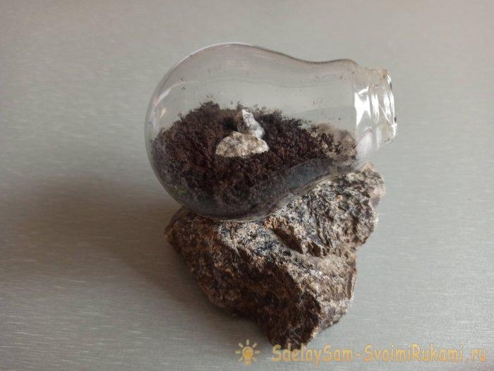 Как сделать террариум в лампочке
