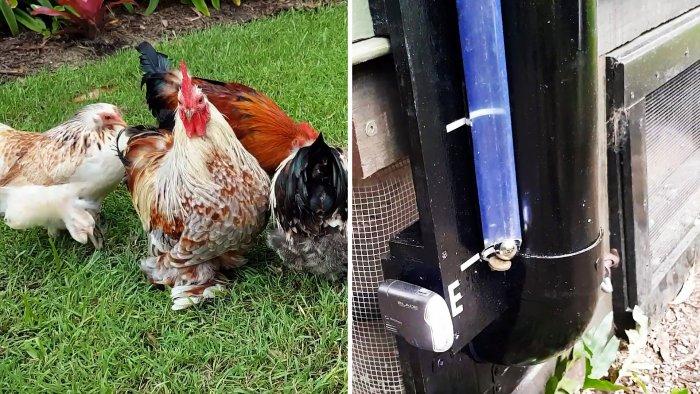 Любопытный индикатор уровня корма в кормушке для куриц своими руками